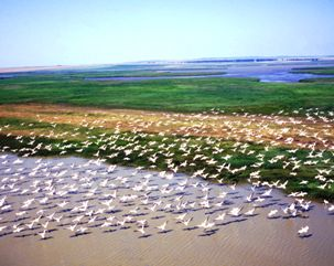Fly over Danube Delta